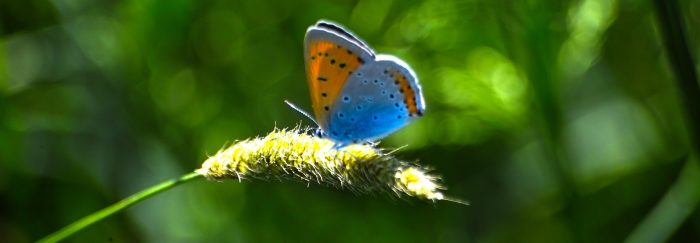 Rencontres biodiversité